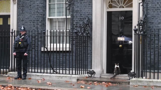 larry the cat arrives at 10 downing street on november 20 2018 in london england the dup abstained or backed labour on amendments to the government's... - downing street stock-videos und b-roll-filmmaterial