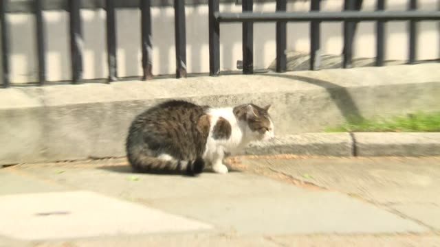 larry the cat defends his territory against another cat outside 10 downing street westminster - number stock videos & royalty-free footage