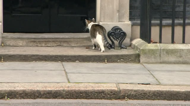 larry the cat entering 10 downing street - 10 downing street stock videos & royalty-free footage