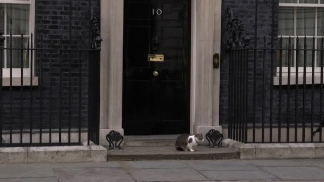 larry the cat plays it cool with the watching media outside no10 downing street - downing street stock-videos und b-roll-filmmaterial