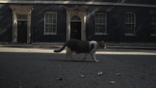 larry the cat, walking past 10 downing street - low angle view stock videos & royalty-free footage