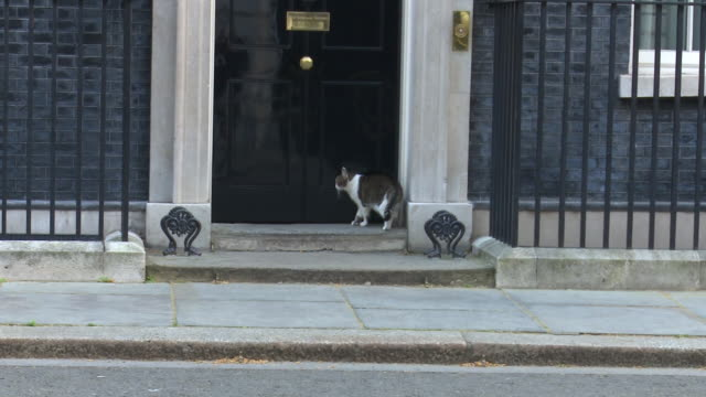 larry the downing street cat being let in to number 10 - steps and staircases stock videos & royalty-free footage