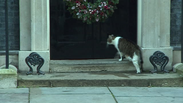 larry the downing street cat outside number 10 - moving after stock videos & royalty-free footage