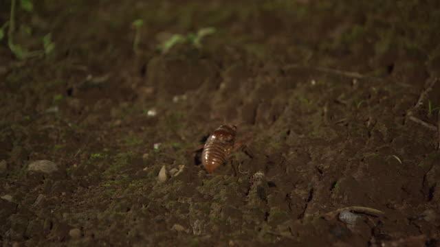 a larva of cicada - larva stock videos & royalty-free footage