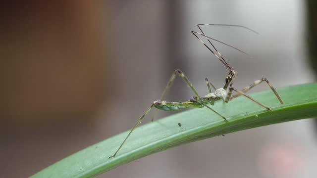 larva von hemiptera - tierisches verhalten stock-videos und b-roll-filmmaterial