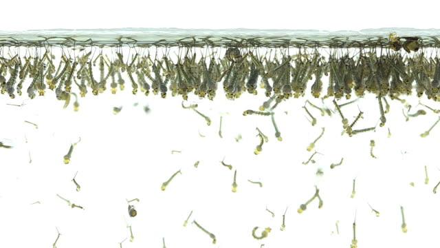 vídeos de stock, filmes e b-roll de larva - larva