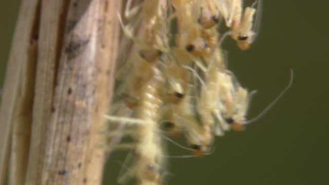 larvae of mantis - heckklappe teil eines fahrzeugs stock-videos und b-roll-filmmaterial