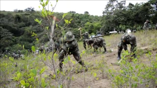 Las autoridades bolivianas destruyeron el viernes plantaciones ilegales de coca encontradas en el parque natural de Madidi que supuestamente...