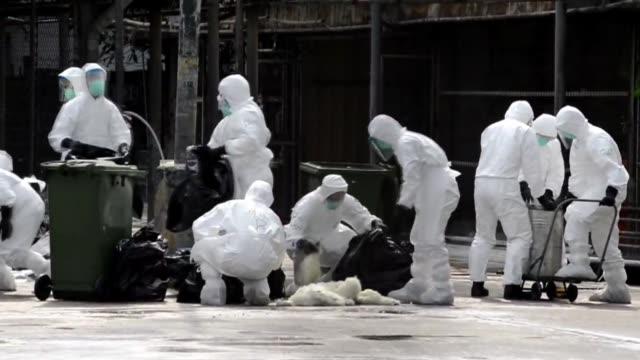 stockvideo's en b-roll-footage met las autoridades de hong kong anunciaron que este martes comenzo la operacion de matanza de unos 20.000 pollos despues del descubrimiento de un foco... - vogelpestvirus