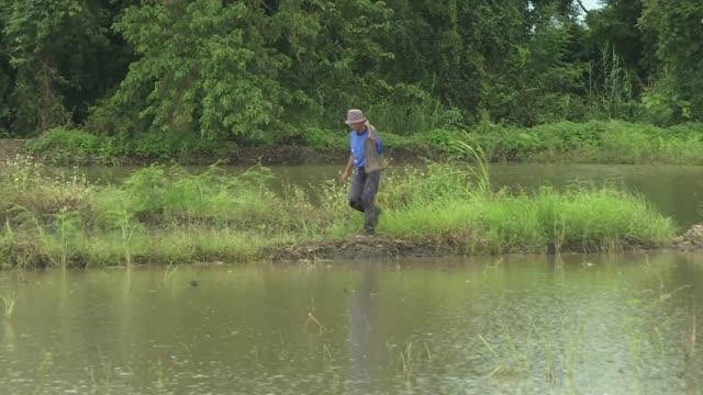 las inundaciones arruinaron su cosecha y mataron a sus animales pero lek y otros campesinos estan satisfechos de sacrificarse por una buena causa es... - lek stock videos & royalty-free footage