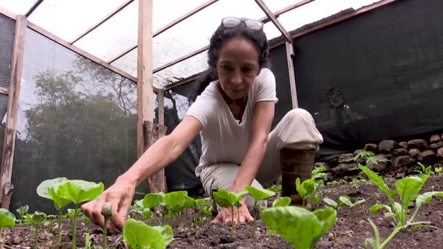 stockvideo's en b-roll-footage met las islas galápagos son famosas por su fauna y flora únicas en el mundo. en cambio su agricultura en un suelo hostil de rocas volcánicas y la pesca... - agricultura