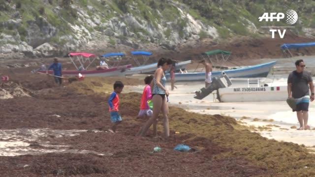 las playas del caribe mexicano tienen un visitante incomodo el sargazo un alga espesa y pestilente que ha cambiado el tono turquesa del agua y de la... - image manipulation stock videos and b-roll footage