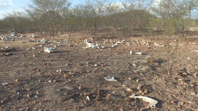 las represas se secan los ganados mueren y los residentes luchan para obtener agua potable en medio de la sequia que azota la region noreste de brasil - agua stock videos & royalty-free footage
