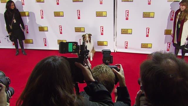 lassie at the broadcast film critics association's 2007 critic's choice awards at santa monica civic auditorium in santa monica, california on... - critics' choice movie awards stock videos & royalty-free footage