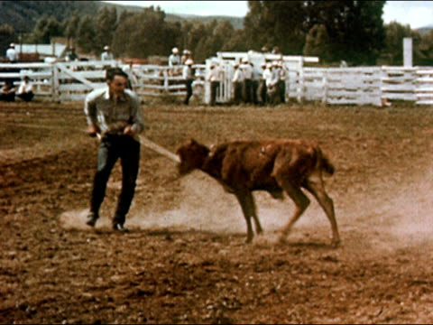 1950 lassoed calf running through corral in rodeo / cowboy tying up calf / gunnison, colorado / audio - gunnison stock videos & royalty-free footage