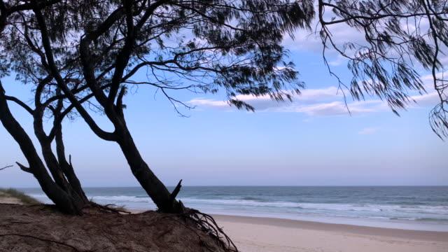 vídeos de stock, filmes e b-roll de tarde atrasada na praia australiana remota - vazante