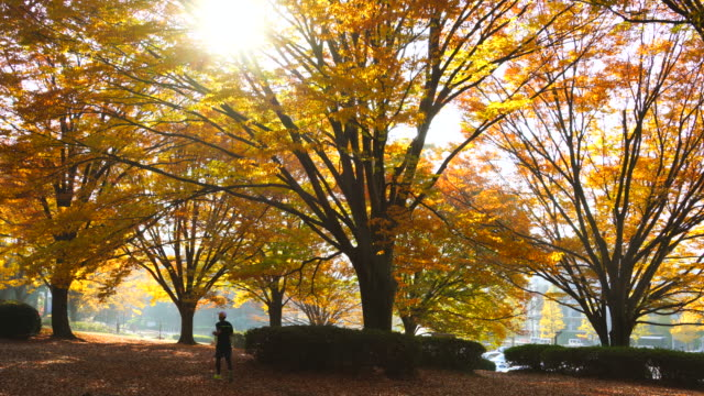 late afternoon sunlight illuminates autumn leaves trees and fallen leaves at yoyogi park shibuya tokyo japan on november 29 2017. - autumn leaf color stock videos and b-roll footage