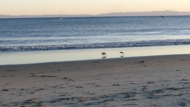 4k late afternoon three sandpipers on the shore reflected in the wets sand sailboats offshore - channel islands california stock videos & royalty-free footage
