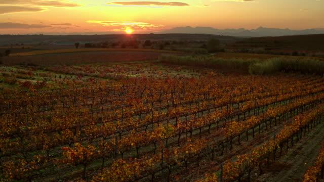 vídeos y material grabado en eventos de stock de viñedo de la tarde en costa brava, catalunya, españa - uva cabernet sauvignon