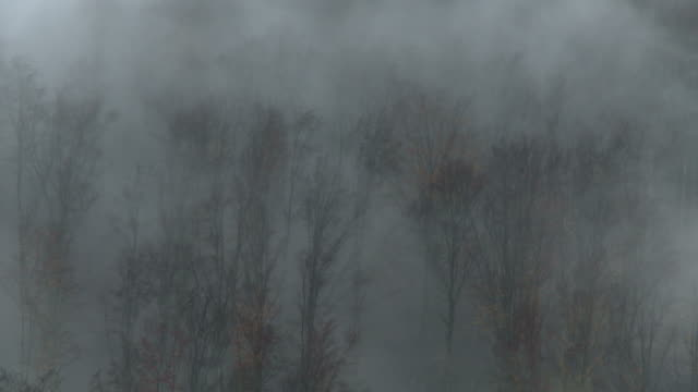 late fall in forest, fog - fog stock videos & royalty-free footage