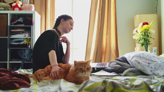 late teenage girl, the college student, working with a laptop when she is sitting on a bed in her room and petting the cat. - bedroom stock videos & royalty-free footage