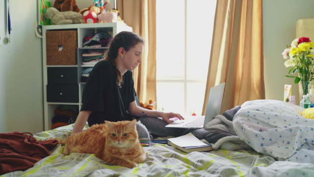 late teenage girl, the college student, working with a laptop when she is sitting on a bed in her room and petting the cat. - braided hair stock videos & royalty-free footage