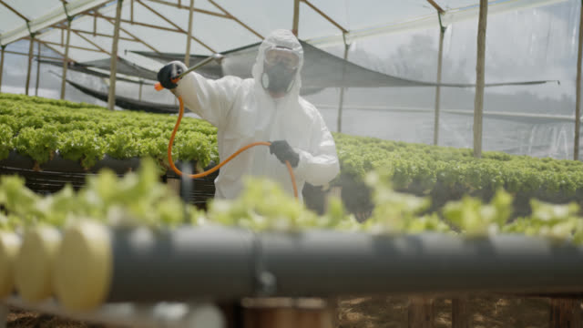 latin american worker wearing protective workwear fumigating a crop at a greenhouse - cultivated land stock videos & royalty-free footage