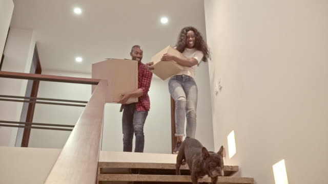 latin-skinned latino couple climb the stairs of their new home along with their pets - colombian ethnicity stock videos & royalty-free footage