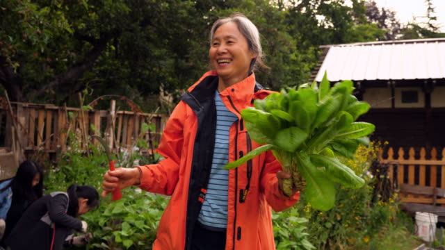 vídeos de stock, filmes e b-roll de ms laughing mature woman holding freshly cut greens in community vegetable garden - vida simples