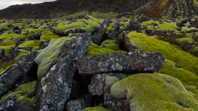 Lava fields in Reykjanes Peninsula
