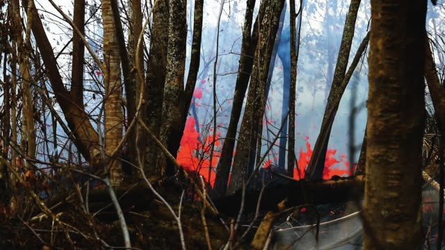 vidéos et rushes de lava from volcanic sprews at a rapid rate and flows and through trees the aftermath of eruptions from the the kilauea volcano on hawaii's big island... - big island îles hawaï