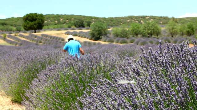 Lavendel veld en man