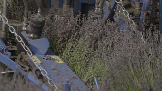 lavender being harvested, japan. - 農作業点の映像素材/bロール