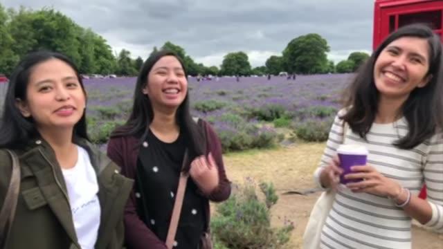vídeos de stock e filmes b-roll de lavender farms experiencing rise in visitors as people seek outdoor activities following lockdown; england: croydon: ext vox pop with lavender field... - outdoor pursuit