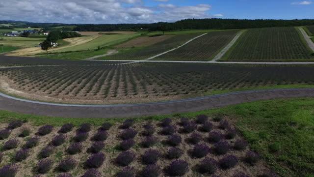 AERIAL, Lavender Field At Hinode Park, Hokkaido, Japan