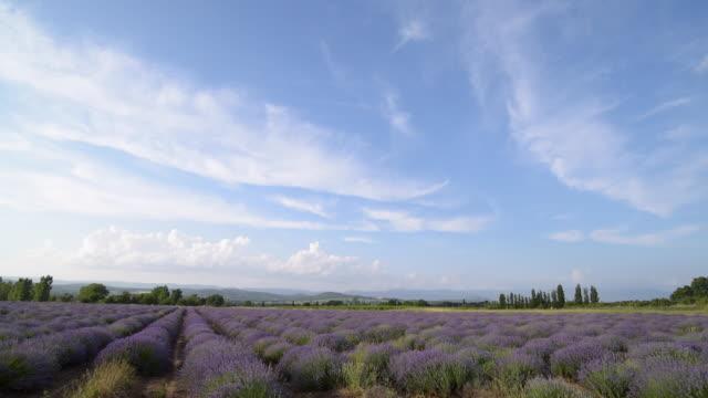 vídeos y material grabado en eventos de stock de lavender field - cirro