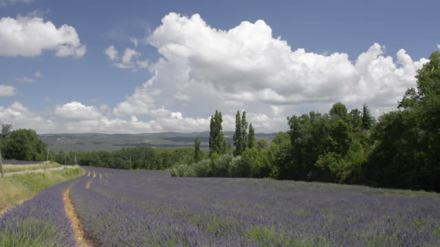 lavender field - luberon stock-videos und b-roll-filmmaterial