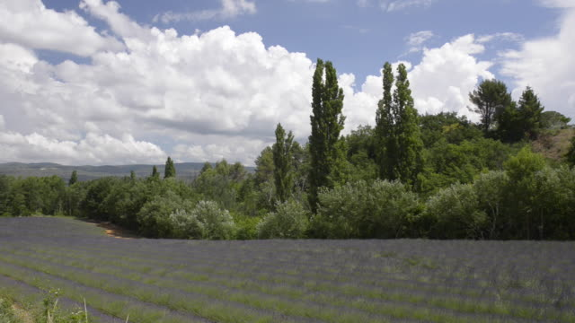 lavender field - luberon stock videos & royalty-free footage