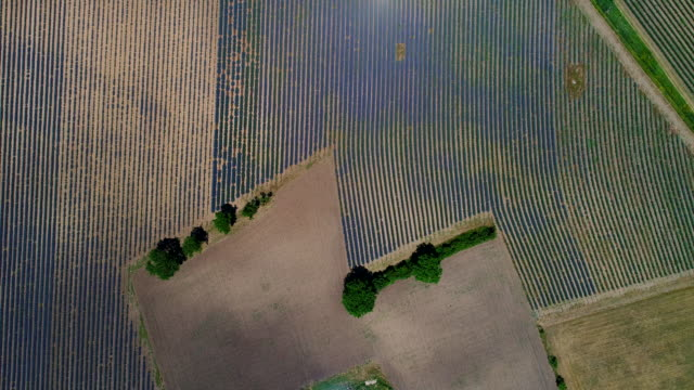 lavender fields, provence, france - 植物 ラベンダー点の映像素材/bロール