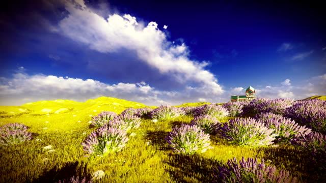 lavender fields - region provence alpes côte d'azur stock-videos und b-roll-filmmaterial