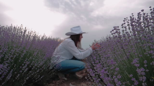lavender. the modern farmer woman walking in her lavender fields in summer, small business and investment, agricultural occupation. - white shirt stock videos & royalty-free footage