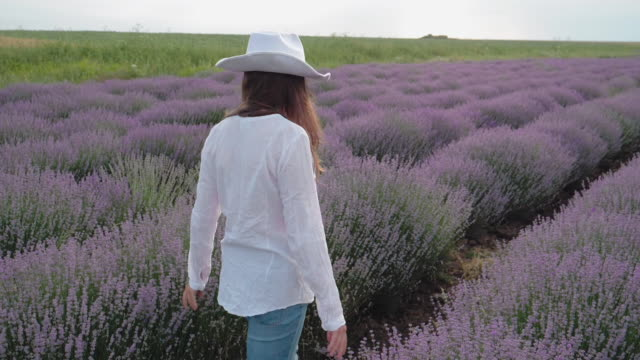 lavender. the modern farmer woman walking in her lavender fields in summer, small business and investment, agricultural occupation. - agricultural occupation stock videos & royalty-free footage