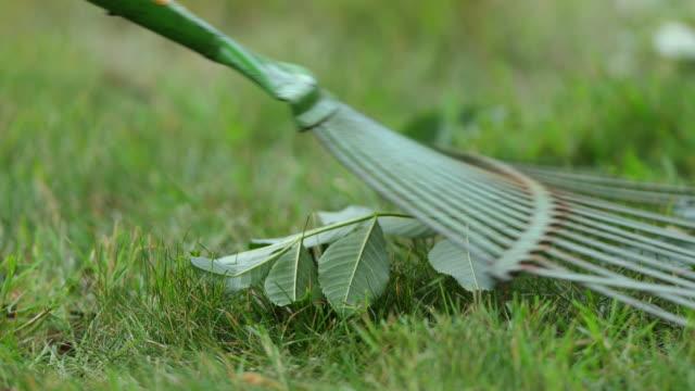 lawn rake close-up. - gräsmatta odlad mark bildbanksvideor och videomaterial från bakom kulisserna