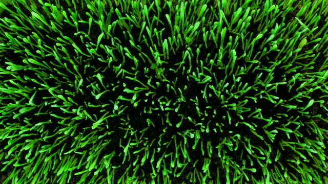 lawn sprout. top view - growth stock videos & royalty-free footage