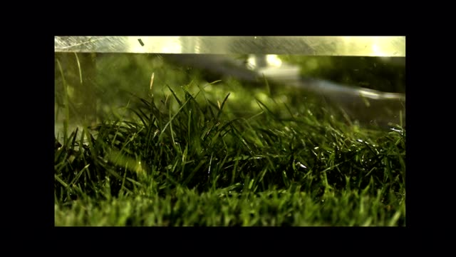 a lawnmower blade cuts a green lawn. - blade stock videos & royalty-free footage