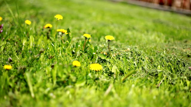 lawnmower cutting beautiful folwers - weeding stock videos & royalty-free footage