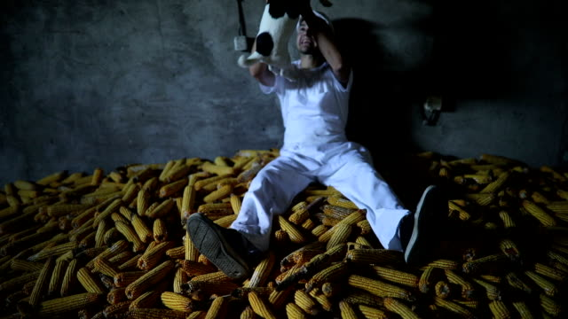 Lazy Butcher Lying On Pile Of Corn