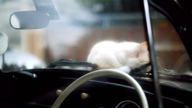 Faule Katze liegend auf der Oldtimer.