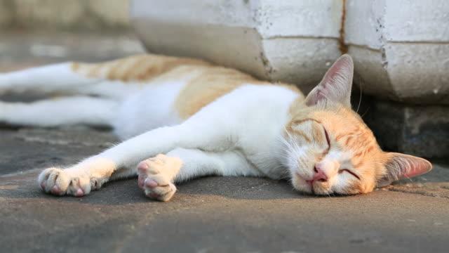 vidéos et rushes de chat paresseux - audio disponible en ligne