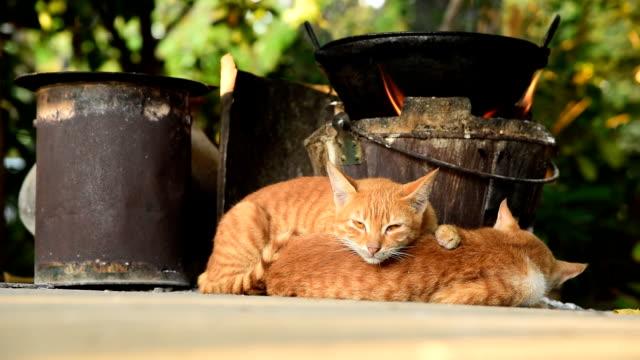 のんびりと猫 - 雑種のネコ点の映像素材/bロール